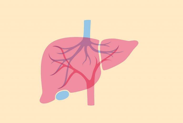 ارتفاع انزيمات الكبد للرضع