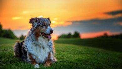 Photo of اقوى فكوك الكلاب… قائمة بعدد من أشرس الكلاب على الإطلاق
