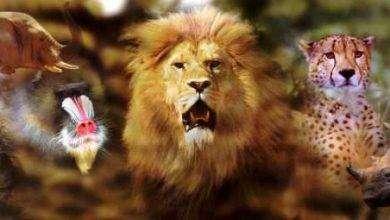 Photo of اقوى الحيوانات في العالم بالترتيب… معلومات عن أقوى ثمانية حيوانات في العالم