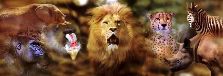 اقوى الحيوانات في العالم