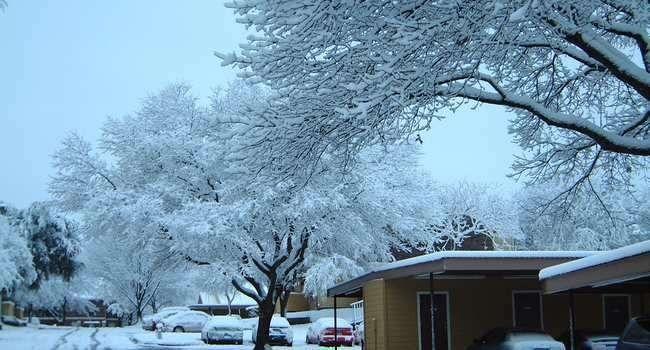 فصل الشتاء في مدينة غارلاند ولاية تكساس