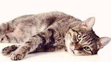 Photo of أعراض مرض القطط للحوامل