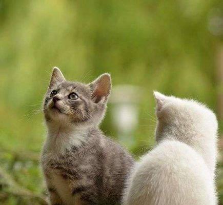 كيف تفهم القطط