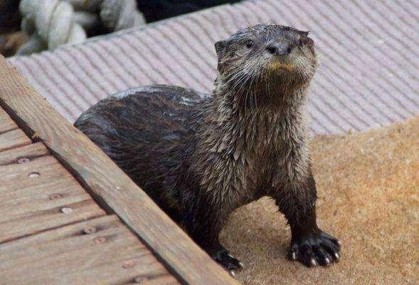 بماذا تشتهر ولاية ويسكونسن الأمريكية في الحيوانات