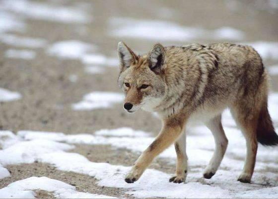 بماذا تشتهر ولاية ميزوري الأمريكية في الحيوانات