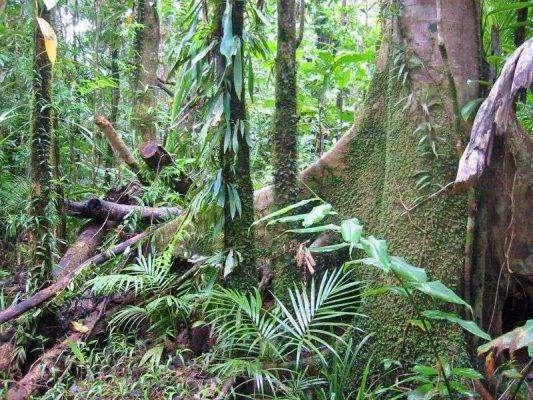الكثير من الغابات المطيرة ..