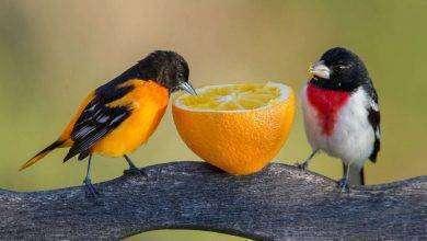 Photo of علاج مرض الكبد عند الطيور