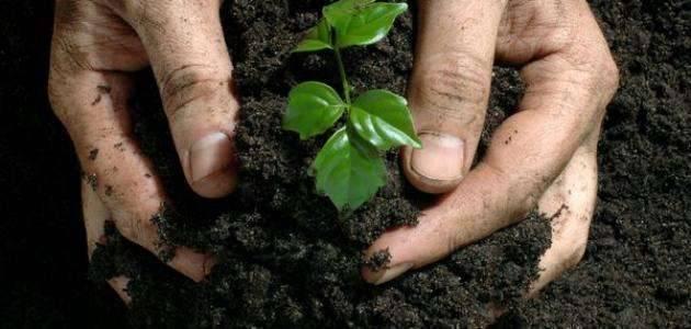 بماذا تشتهر الأردن في الزراعة