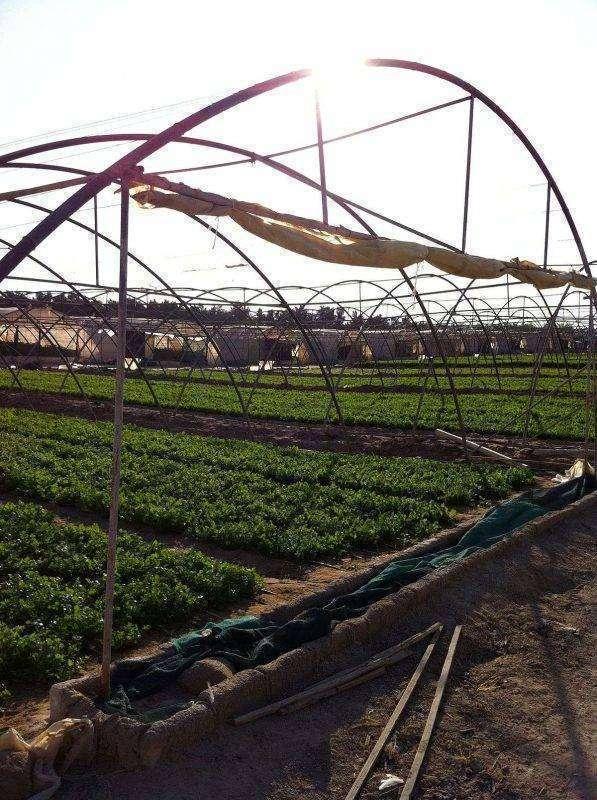 بماذا تشتهر الكويت في الزراعة