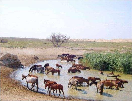 بماذا تشتهر كازاخستان في الحيوانات