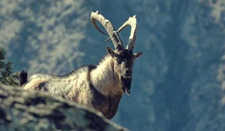 بماذا تشتهر أرمينيا في الحيوانات