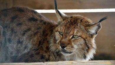 Photo of بماذا تشتهر ألبانيا في الحيوانات