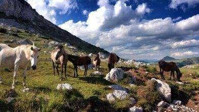 Photo of بماذا تشتهر البوسنة والهرسك في الحيوانات