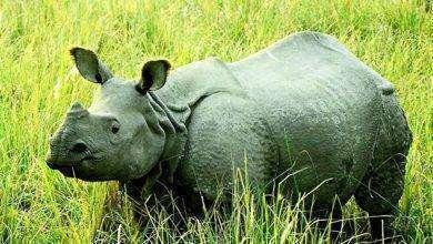 Photo of بماذا تشتهر الهند في الحيوانات