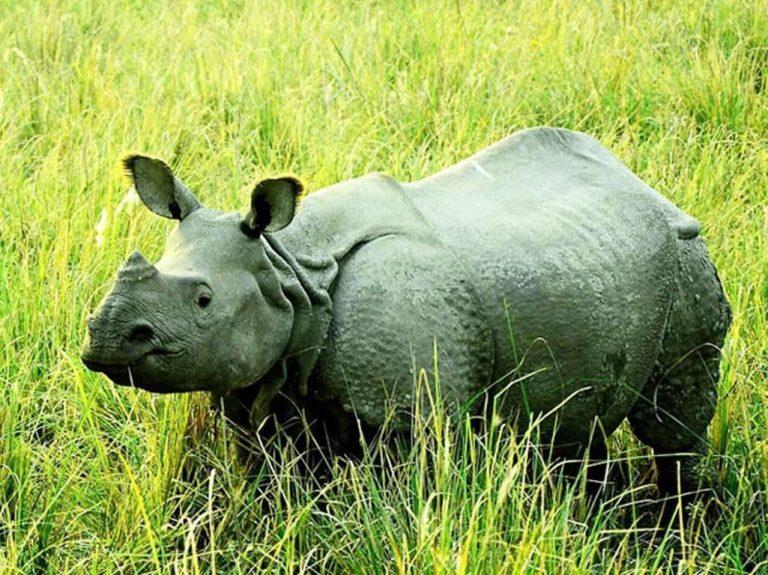 بماذا تشتهر الهند في الحيوانات