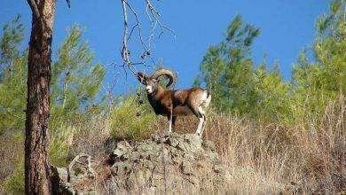 Photo of بماذا تشتهر اليونان في الحيوانات