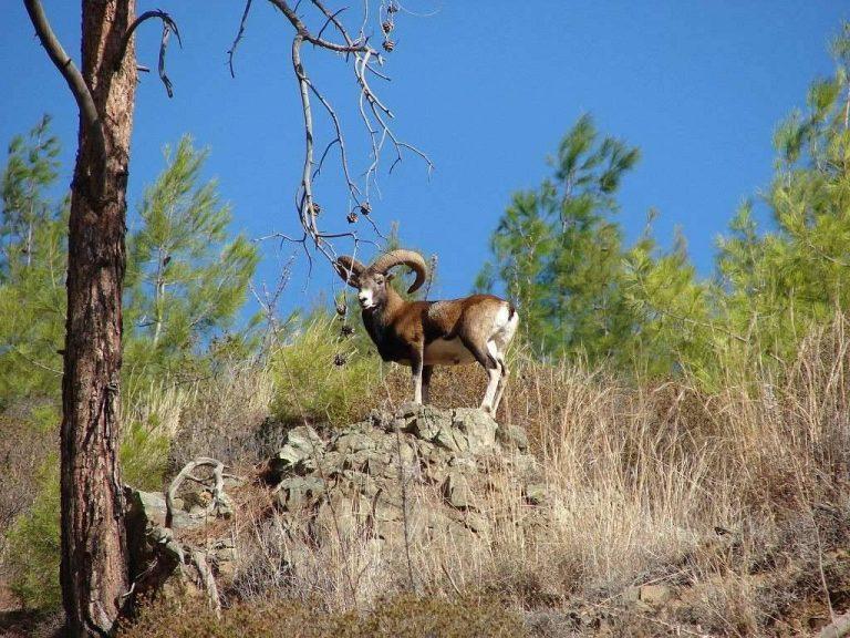 بماذا تشتهر اليونان في الحيوانات