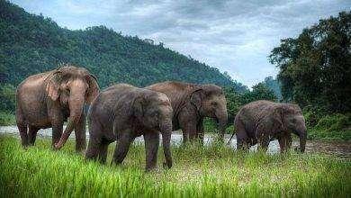 صورة بماذا تشتهر تايلند في الحيوانات