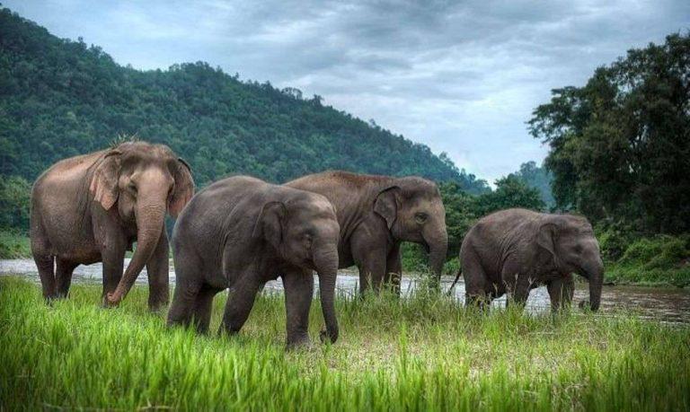 بماذا تشتهر تايلند في الحيوانات