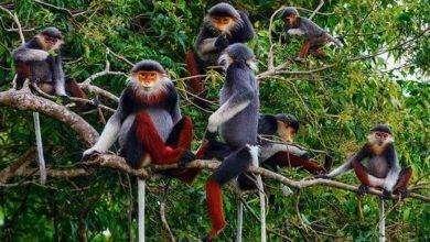 Photo of بماذا تشتهر فيتنام في الحيوانات