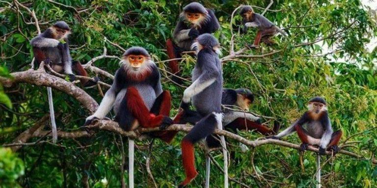 بماذا تشتهر فيتنام في الحيوانات