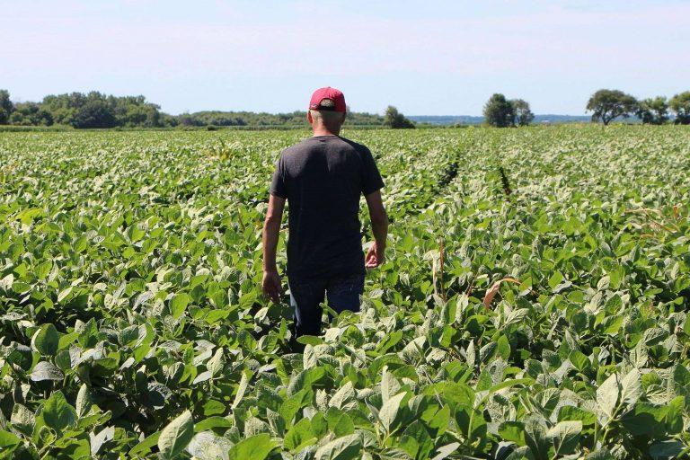 بماذا تشتهر ولاية نيويورك الأمريكية في الزراعة