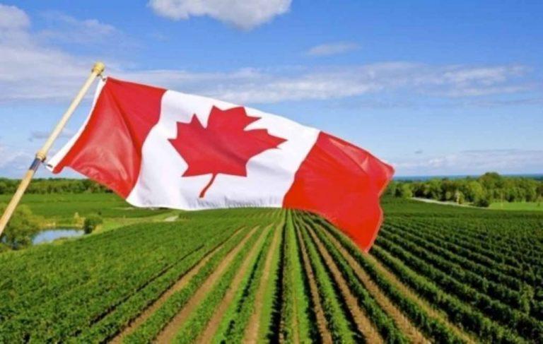 بماذا تشتهر كندا في الزراعة