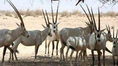 Photo of بماذا تشتهر الأردن في الحيوانات