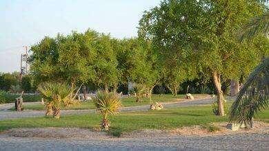 Photo of بماذا تشتهر الكويت في الزراعة