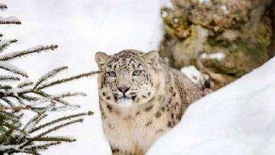 Photo of بماذا تشتهر كازاخستان في الحيوانات