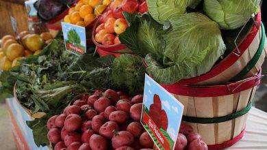 Photo of بماذا تشتهر ولاية نيويورك الأمريكية في الزراعة