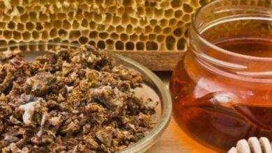 Photo of فوائد العكبر مع العسل