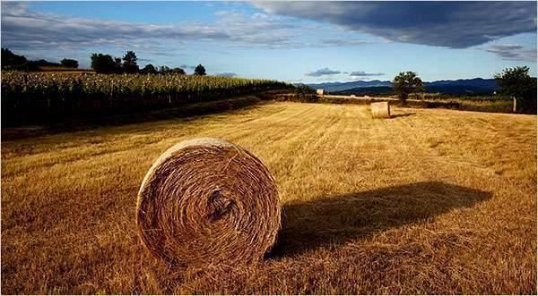 قطاع الزراعة في سلوفينيا