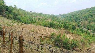 Photo of بماذا تشتهر تايلند في الزراعة