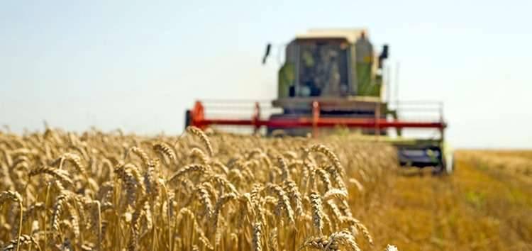 انتاج الحبوب في صربيا
