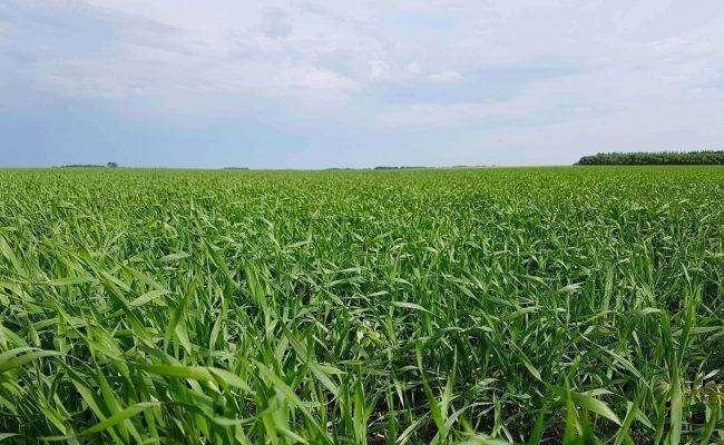 بماذا تشتهر الجزائر في الزراعة