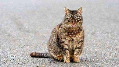Photo of أعراض حمل القطط