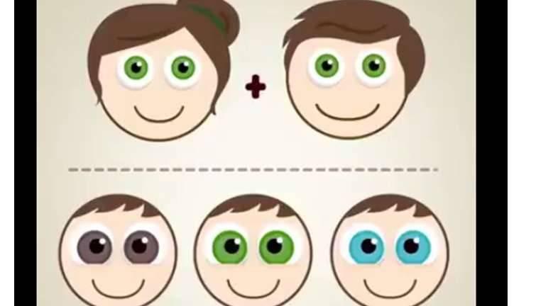 كيف تعرف لون عيون المولود