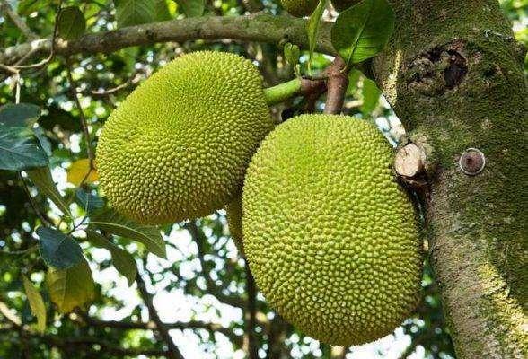 بماذا تشتهر سريلانكا في الزراعة