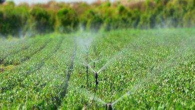 Photo of بماذا تشتهر الجبل الأسود في الزراعة