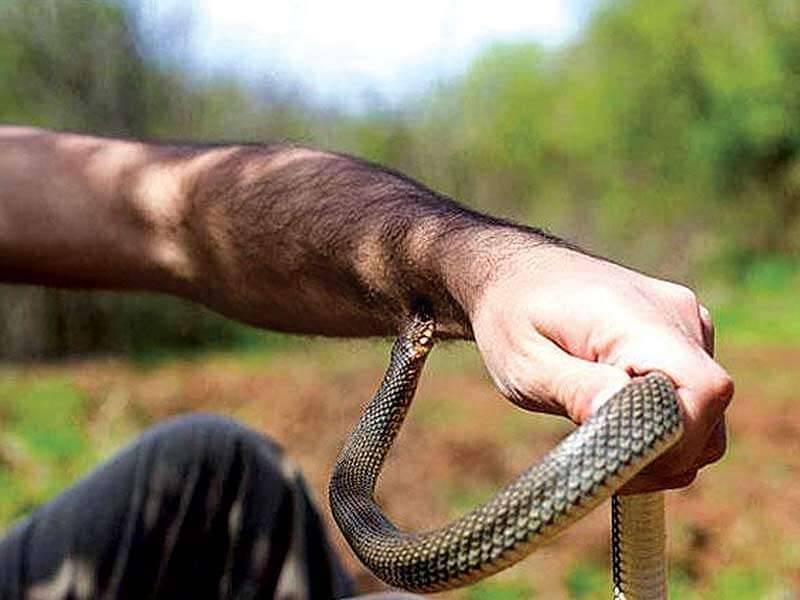 كيف تعرف لدغة الثعبان