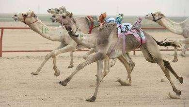 صورة بماذا تشتهر الكويت في الحيوانات