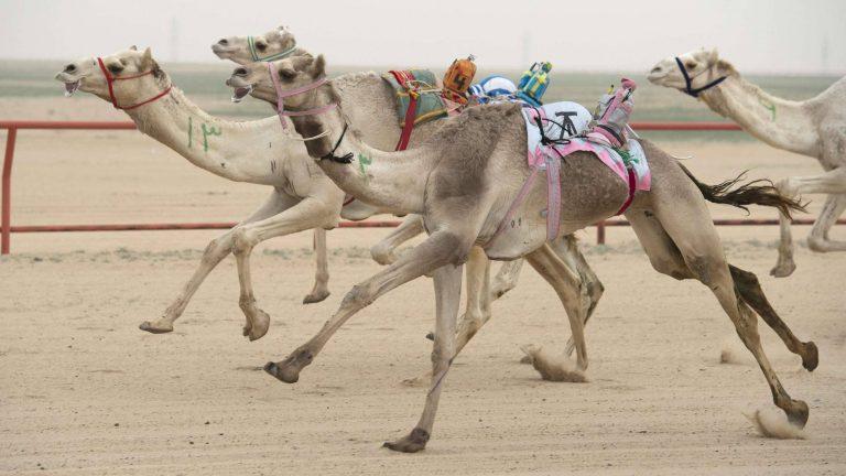 بماذا تشتهر الكويت في الحيوانات