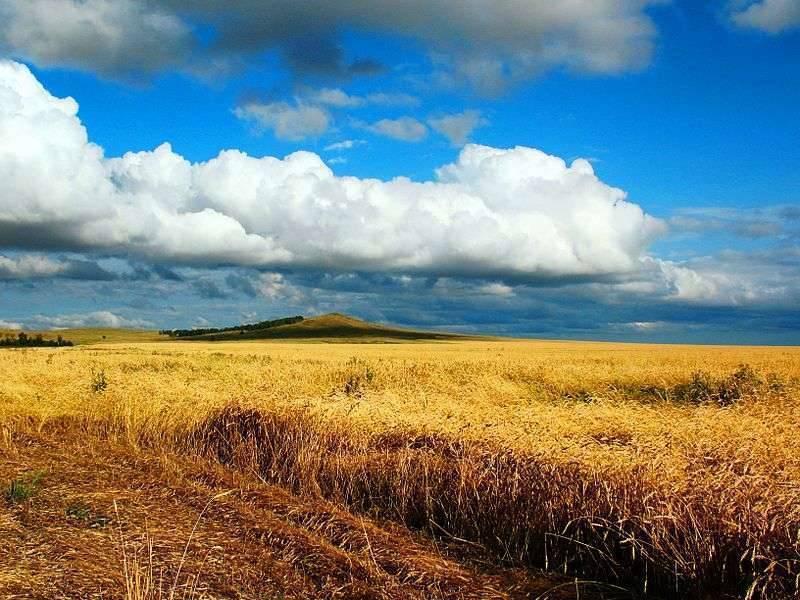بماذا تشتهر كازاخستان في الزراعة