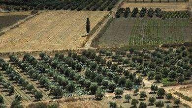 Photo of بماذا تشتهر اليونان في الزراعة