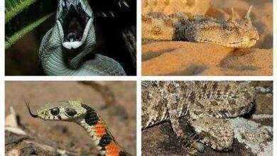 Photo of بماذا تشتهر الجزائر في الحيوانات