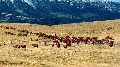 Photo of بماذا تشتهر ولاية مونتانا الأمريكية في الصناعة والتجارة