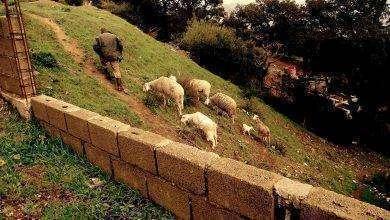 Photo of بماذا تشتهر الجزائر في الزراعة