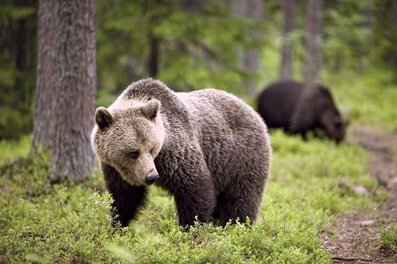 بماذا تشتهر البوسنة والهرسك في الحيوانات