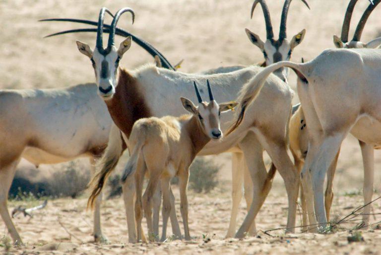 بماذا تشتهر البحرين في الحيوانات